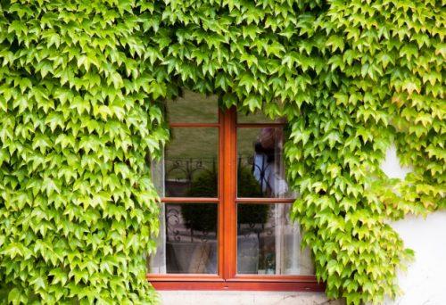 岡崎市で窓をリノベーションしたい!方法と注意点を解説します