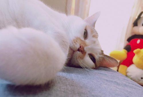 岡崎市でリノベーション|ペットにとっても快適な家づくりとは?
